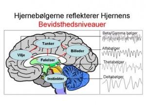 Hjerneboelger bevidsthedsniveauer